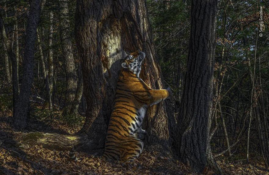 Победитель в категории «Животные в дикой среде». Фотограф Сергей Горшков