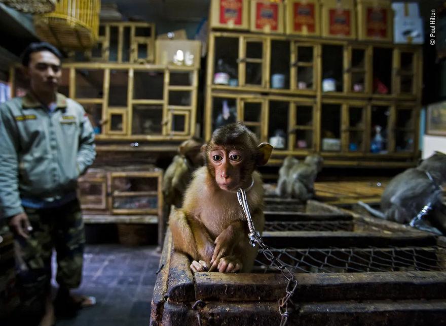 Победитель в номинации «История фотожурналиста дикой природыы». Фотограф Paul Hilton