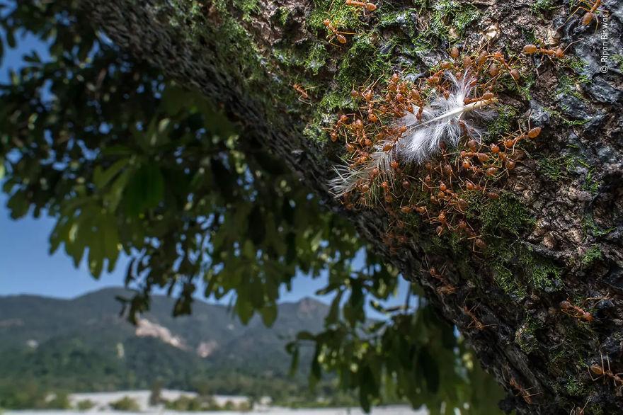 Победитель в номинации «Портфолио фотографа дикой природы». Фотограф Ripan Biswas