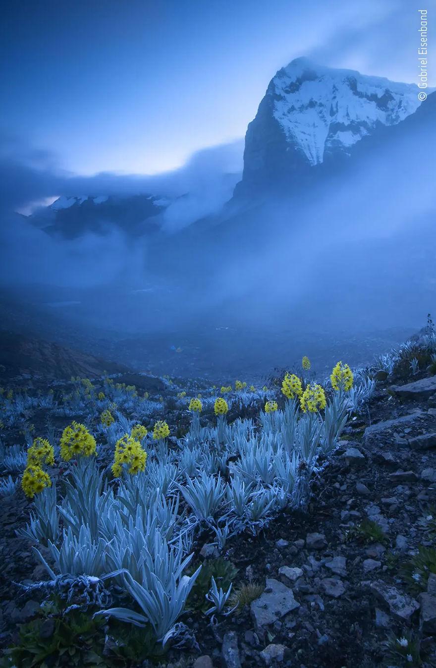 Победитель в категории «Растения и грибы». Фотограф Gabriel Eisenband