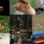 Победители конкурса фотографии Wildlife Photographer of the Year 2020