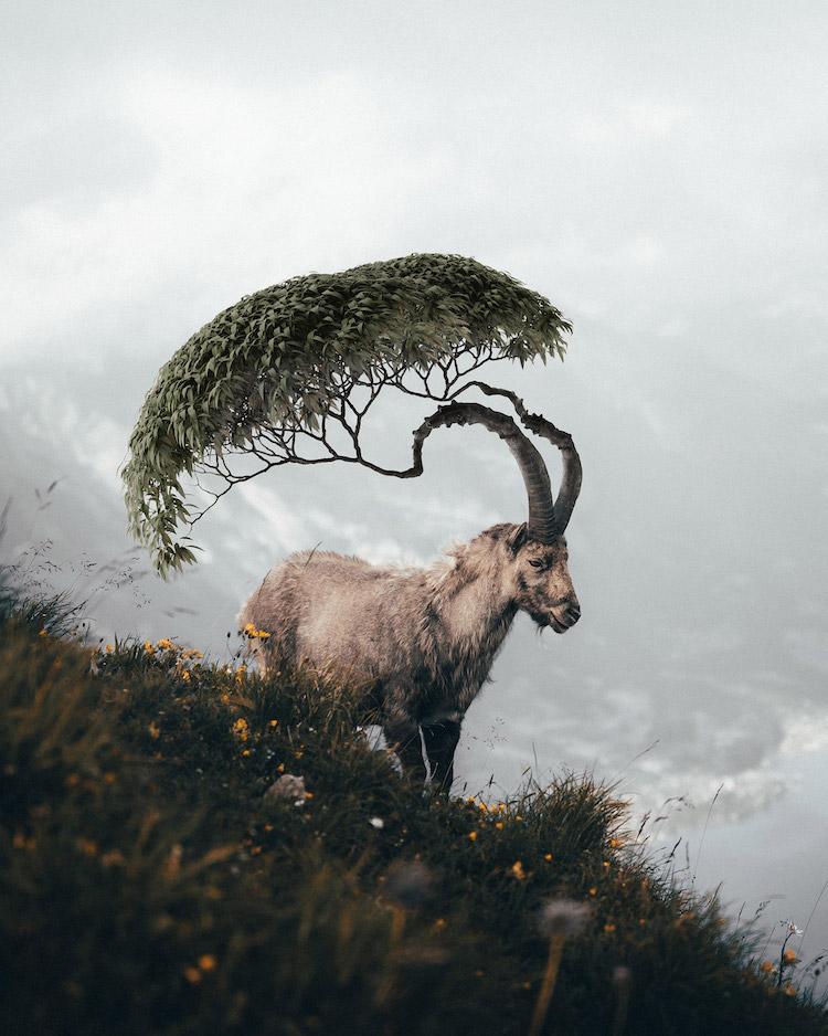 Сюрреалистичные композиции Теда Чина