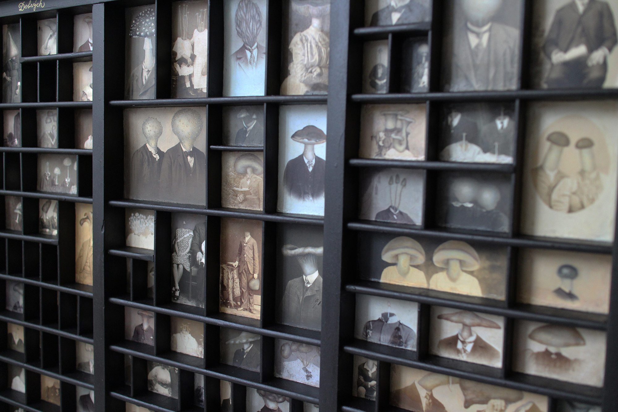 Династия грибов в причудливых изображениях