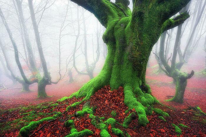 Лес, похожий на сказочный