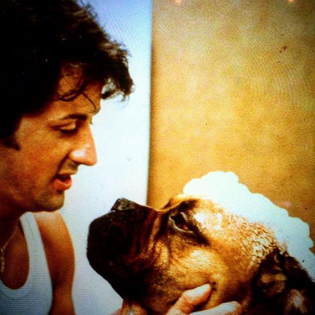 В 1971 году Сильвестр Сталлоне продал свою собаку за , а затем выкупил обратно за 000