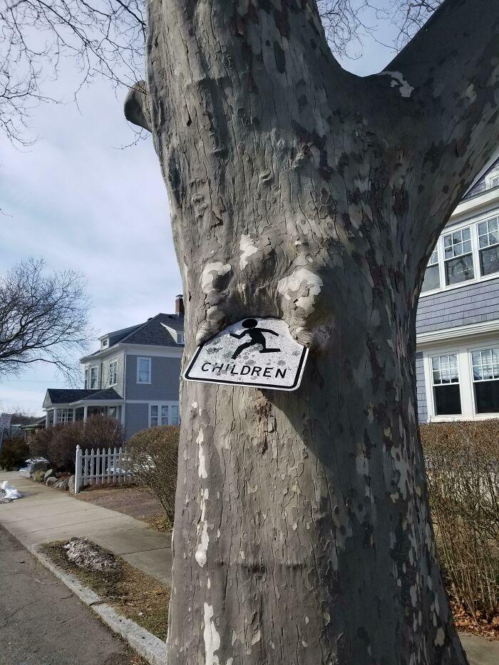 Дерево, пожирающее знак
