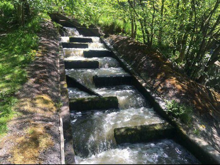 Лестницы для лосося, Швеция