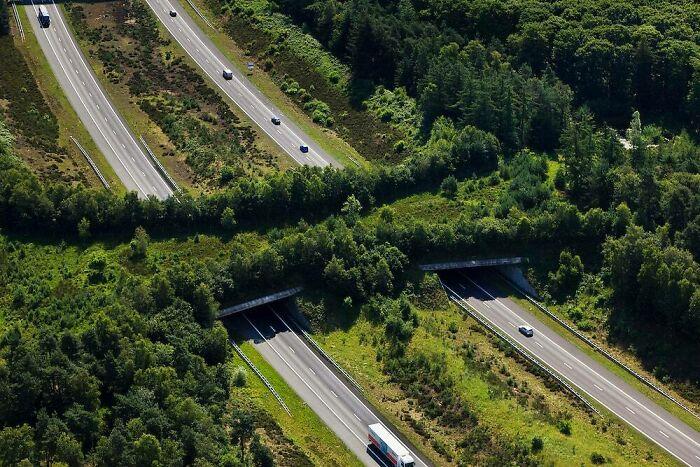 Экодук (мост для перехода трассы животными) через автостраду A1, Велюве, Нидерланды