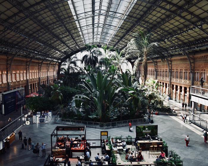 Ботанический сад на вокзале Аточа, Мадрид