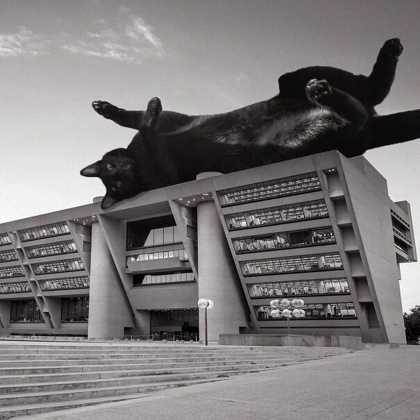 Гигантские кошки на бруталистской архитектуре