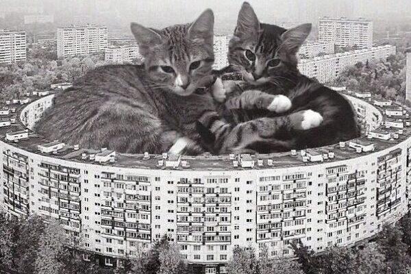Что произойдет, если кошки внезапно увеличатся