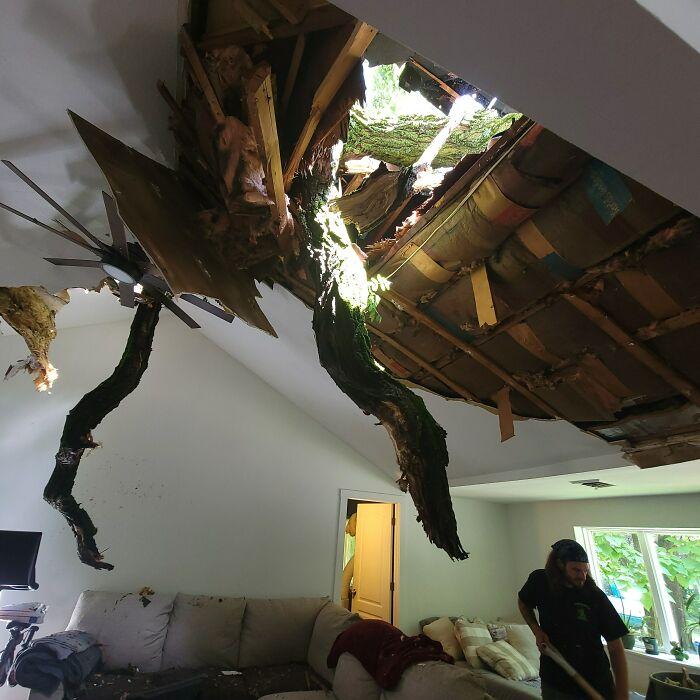 «Вчера 80-футовое дерево нашего соседа подарило нам люк на крыше, великолепный вид на звёзды и атмосферу тропического леса, которой всегда не хватало в нашей гостиной»