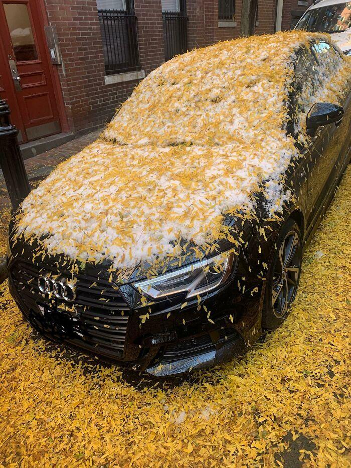 Когда прошёл снег до того, как опали листья