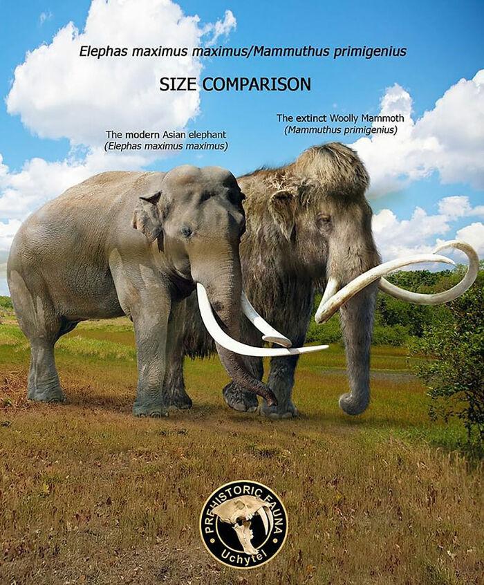 Современный азиатский слон и мамонт