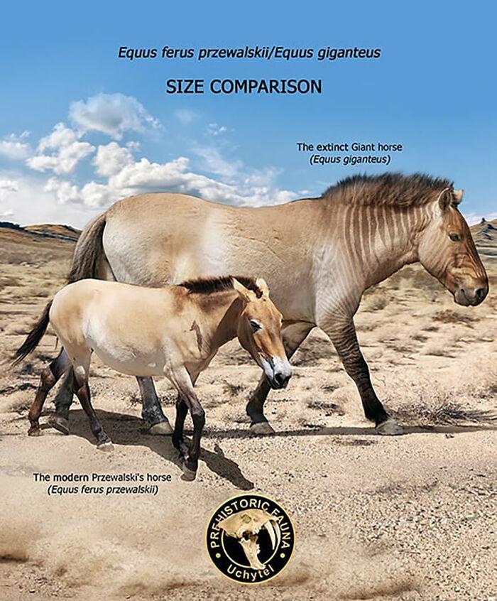 Современная лошадь Пржевальского и вымершая гигантская лошадь