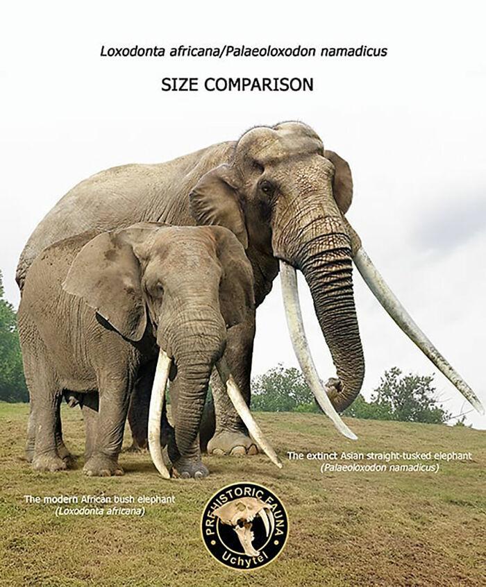 Современный африканский слон и вымерший азиатский палеолоксодонт