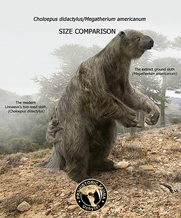 Современный ленивец и вымерший мегатерий