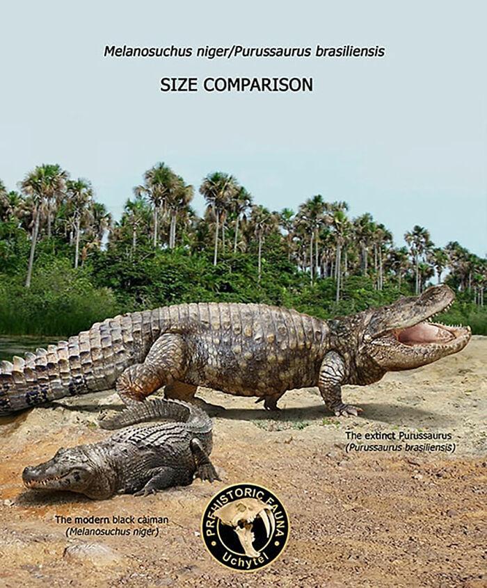 Современный чёрный кайман и вымерший пурасзавр