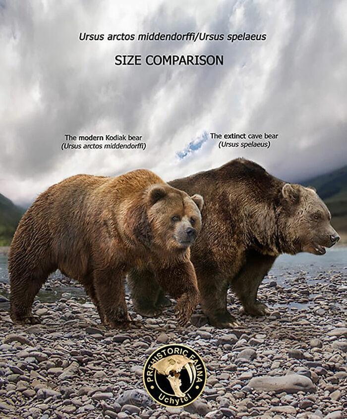 Современный бурый медведь и вымерший пещерный медведь