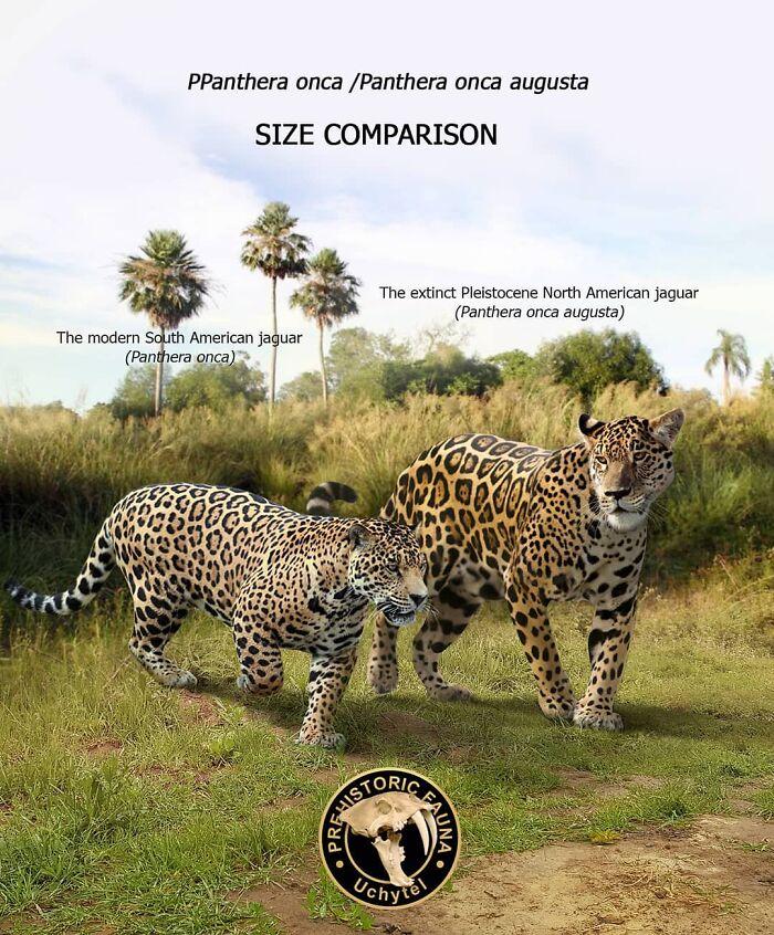 Современный южноамериканский ягуар и вымерший североамериканский ягуар