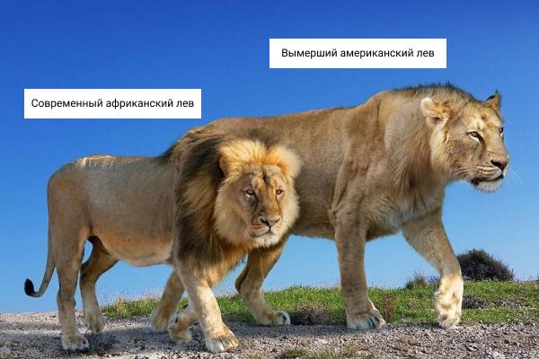 Сравнение размеров вымерших древних животных и их современных родственников