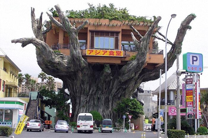 Ресторан на дереве (снесён), Окинава